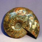 Раковина моллюска аммонита образовала красивый камень аммолит