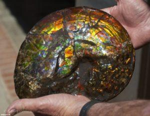 Магическая сила камня аммолита была замечена еще много веков назад.
